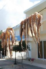 Свежие осьминоги