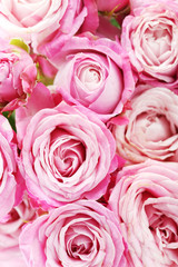 Foto op Textielframe Roses beautiful pink roses background, close up