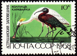 Spoonbill and ibis on post stamp
