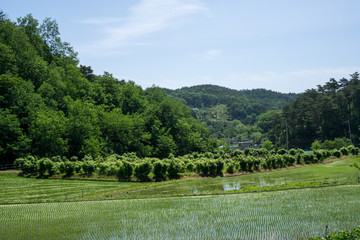 Farming in Gangneung