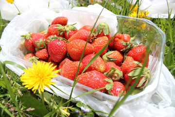 Fresh strawberries in plastic box