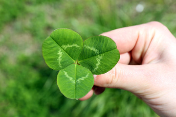 Female hand with four leaves clover, closeup
