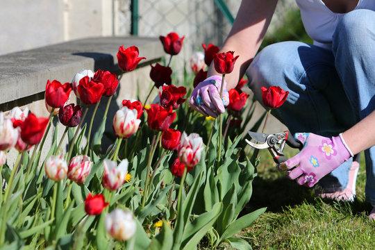 Women and Tulips