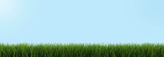 Grass closeup (clipping path included)