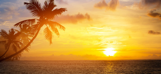 Poster Palmier Art Beautiful sunrise over the tropical beach