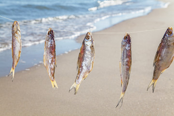 Caught fish drying on rope