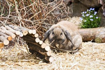 Baby Kaninchen im Aussengehege