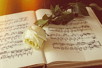 Ancient melody of love, note and rose