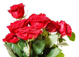 side view of bunch of red roses isolated
