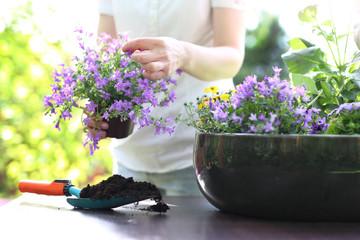 Obraz Mój piękny ogród - fototapety do salonu