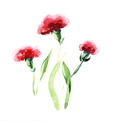 the carnation watercolor flowers isolated on the white background