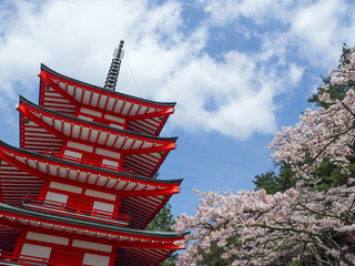 Chureito pagoda with cherry blossom