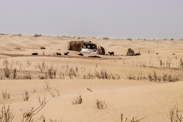 Traditional desert nomad straw dwelling with goats nearby.