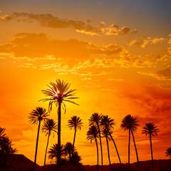 Almeria in Cabo palm trees in Rodalquilar Spain