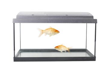 empty squared fish tank