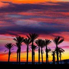 Almeria Cabo de Gata sunset pam trees Retamar