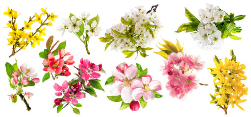 Blossoms of apple tree, cherry twig, pear, forsythia. Set of spr