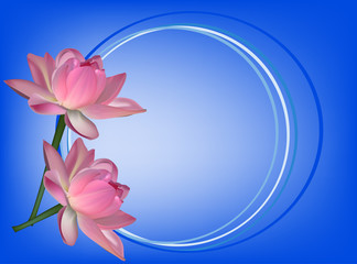 two lotus flowers on blue background
