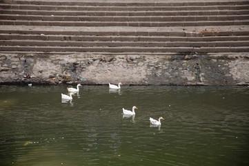 Duck Thirteen