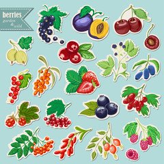 Vector collection of isolated garden and wild berries. Sticker elements