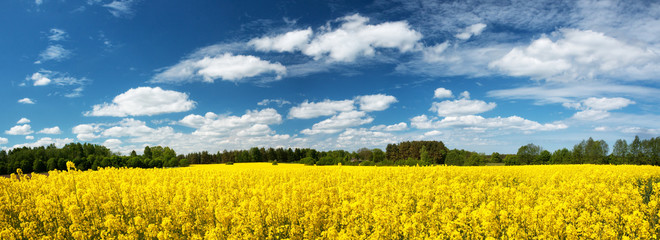 Poster Orange Rapeseed field panorama with beautiul sky