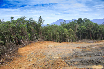 Deforestation environmental destruction in Borneo Malaysia