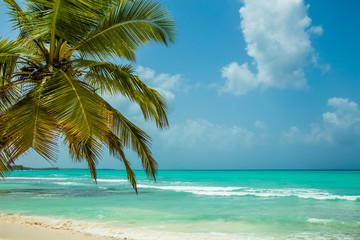 Paradise Island Saona