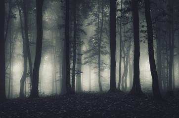 Papiers peints Forets dark forest landscape at night