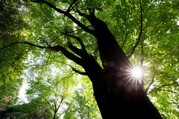 新緑の木々と木漏れ日