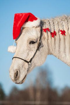 White christmas horse with santa hat
