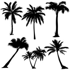 vector set of  palms silhouettes