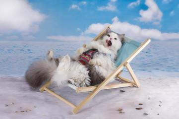 Cat in a swimsuit sunbathe on the beach