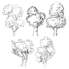Hand drawn tree  isolated vector illustration, art sketching  of vector trees symbols in naive style, Pen and ink tree