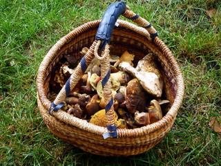 Full basket of forest mushrooms