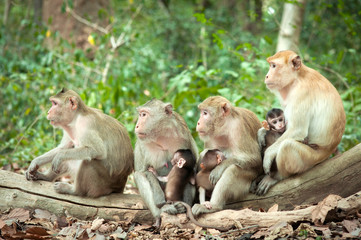 Monkey mothers were breastfeeding in the wild.