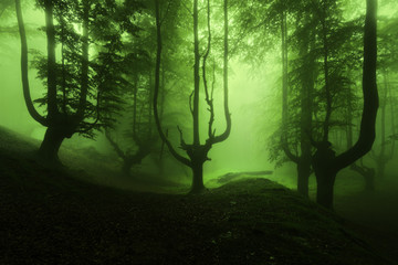 Papiers peints Forets scary forest with green fog
