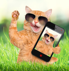 Cat taking a selfie with a smartphone.