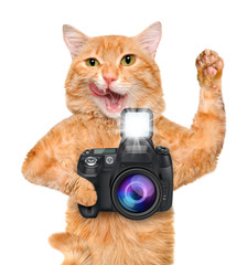 Photographer cat.