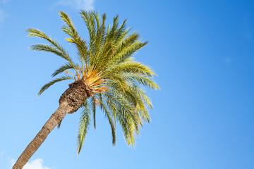 Date palm tree over blue sky