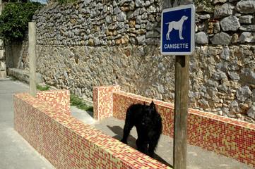 Photos illustrations et vid os de d jections canines - Canisette pour chien ...