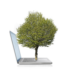 Tree growing from a laptop