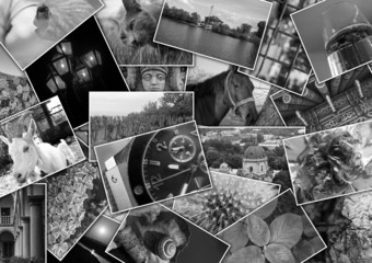 Mosaic colage with pictures of different places, landscapes, flowers, insects, objects and animals shot by myself black and white