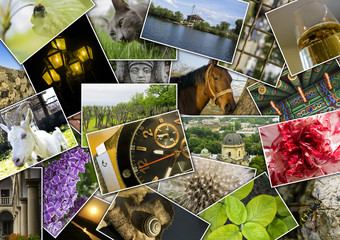Mosaic colage with pictures of different places, landscapes, flowers, insects, objects and animals shot by myself