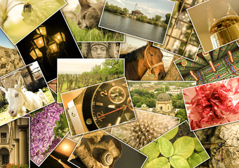 Mosaic colage with pictures of different places, landscapes, flowers, insects, objects and animals shot by myself filtered