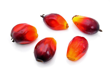 Loose oil palm seed over white background