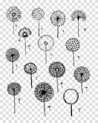 Dandelions collection, sketch fro your design