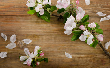 blooming apple twig on a wooden background.