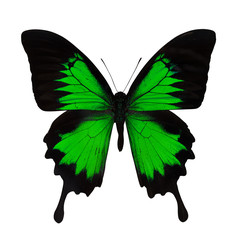 single bright green butterfly