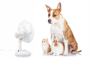 Funny dog with flying ears up, kitten and rabbit sitting opposite the electric fan