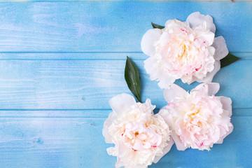 Splendid white peonies  flowers on blue painted wooden planks.